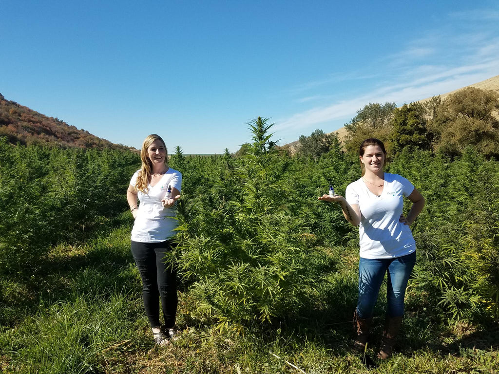 Hemp farms in Oregon with Healthy Roots Hemp Products