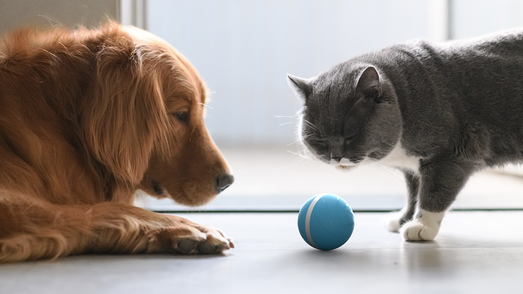 Motion Ball Smart Pet Toy