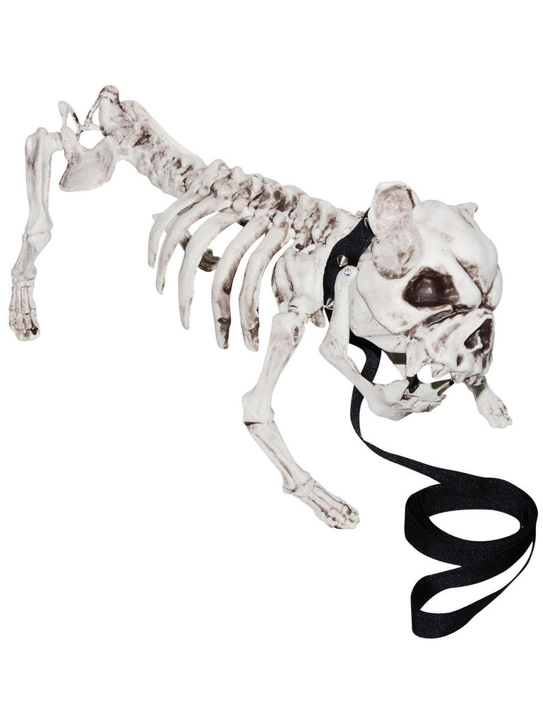Barking Skeleton Dog Prop Decoration - Menacing Vicious Growling Skull Face Pet Bull Doggy, Spiked Collar, Leash - Haunted House, Entryway Party Display
