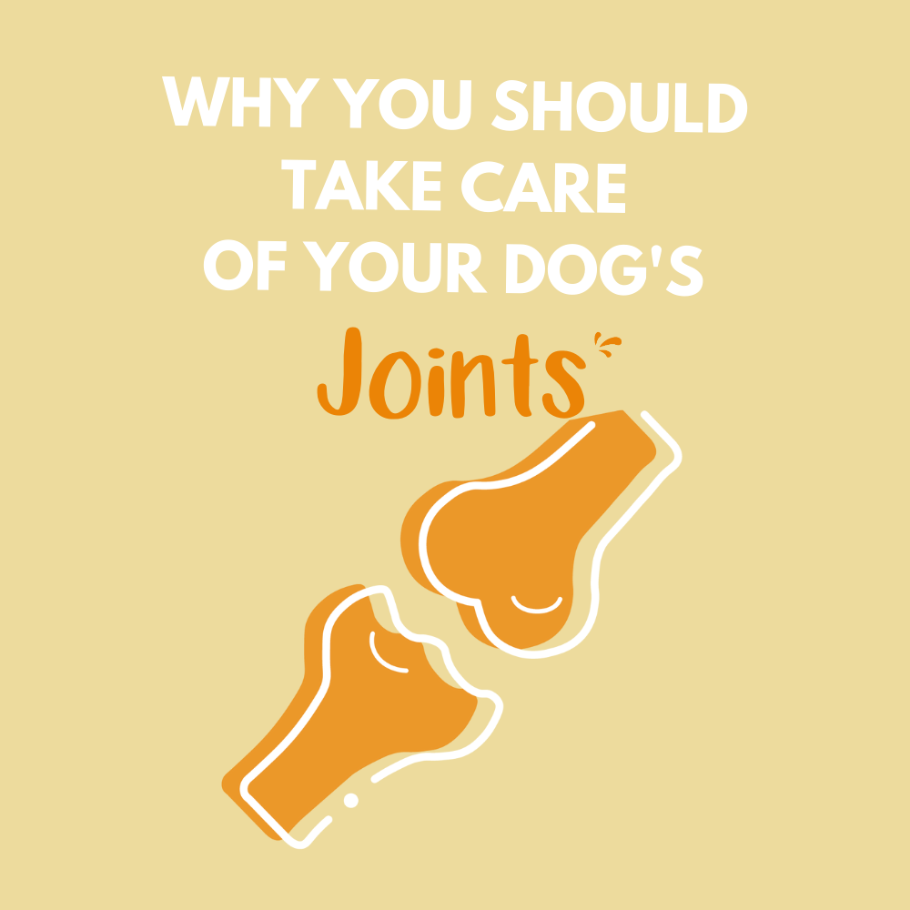 Why you should take care of your dog's joints?