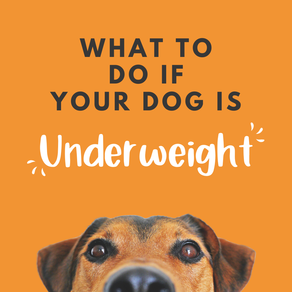 Is your dog underweight? Top tips to help your dog gain weight