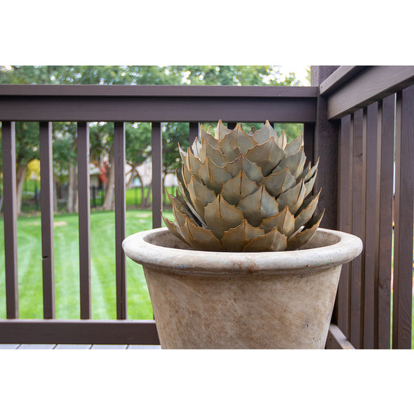 Artichoke Agave in concrete pot