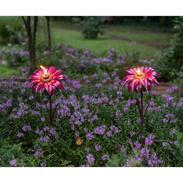 Two Bishop Dahlia torches in garden, lit