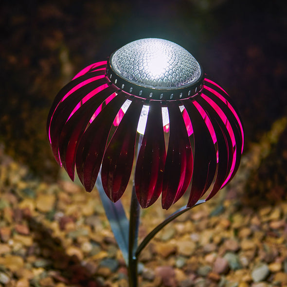 Pink Coneflower Solar Light, lit up in yard