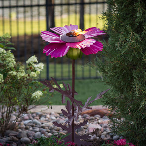 Pink Cosmos Torch in landscape bed