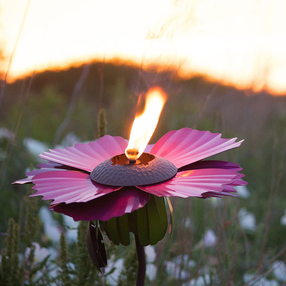 Pink Cosmos Torch, lit