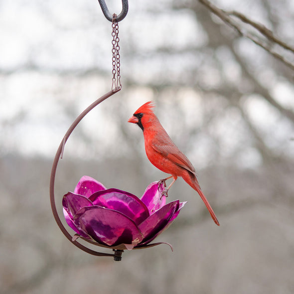 Pink Crab Apple Bird Feeder with cardinel perched