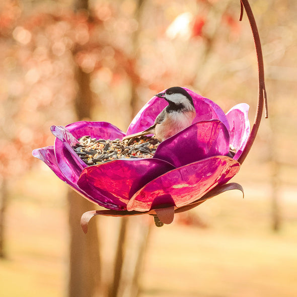 Crab Apple Bird Feeder hanging in outdoor setting