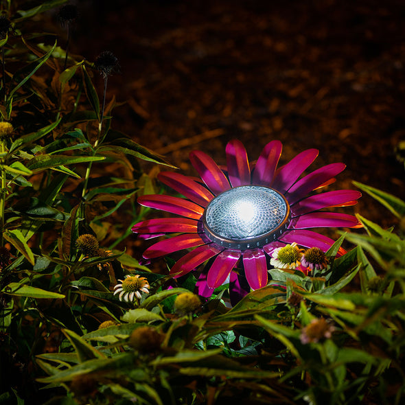 African Pink Daisy Solar Light