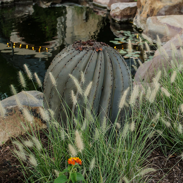 Fishhook Barrel Cactus in landscape bed