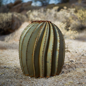 Fishhook Barrel Cactus with desert background
