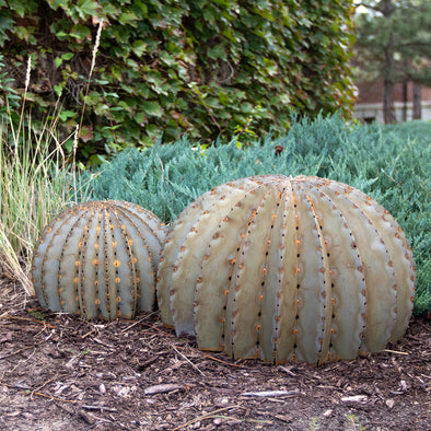 Golden Barrel Cacti, small and large, in landscape bed