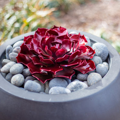 Ruby Rose Succulent