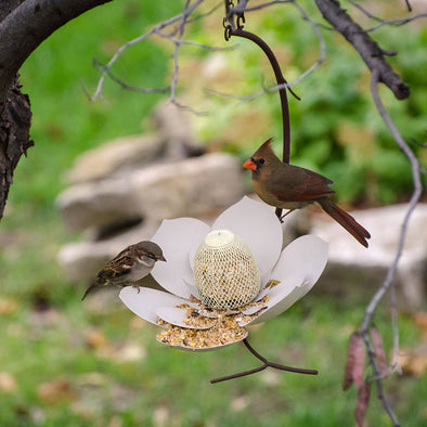 Magnolia Bird Feeder hanging from tree branch with cardinal perched