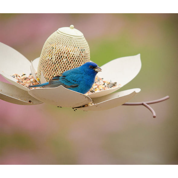 Magnolia Bird Feeder with blue bird feeding