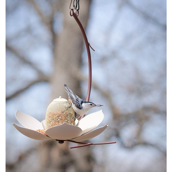 Magnolia Bird Feeder hanging in yard with bird feeding