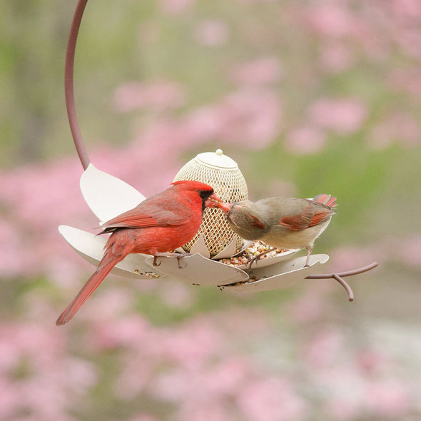 Magnolia Bird Feeder in garden with two cardinals