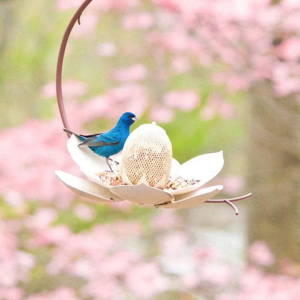 Magnolia Bird Feeder with bird, seed and garden background
