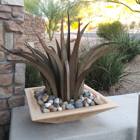 Octopus Agave in modern square pot with landscape stones