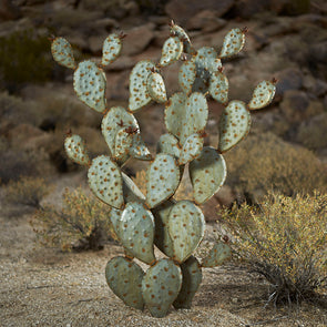 "Large Prickly Pear Sculpture (48"") with desert background"