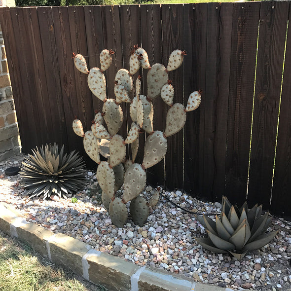 Metal Prickly Pear Sculpture in landscape bed with rock and metal agave
