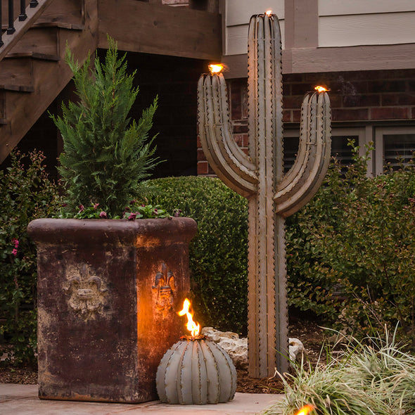 Saguaro Torch with Golden Barrel Cactus in landscape design