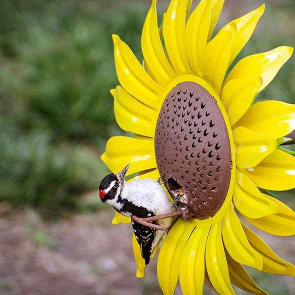 Yellow Sunflower Bird Feeder close up with bird eating seed