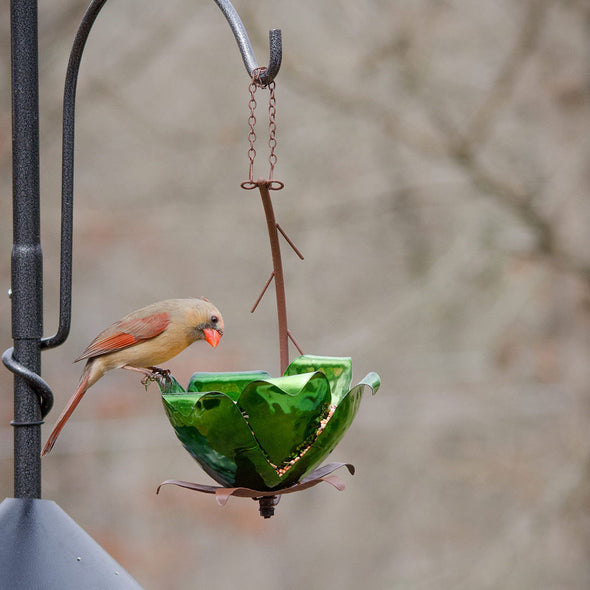 Tulip Tree Hanging Bird Feeder in yard with bird perched