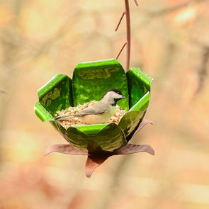 Tulip Tree Bird Feeder with birdseed and bird feeding