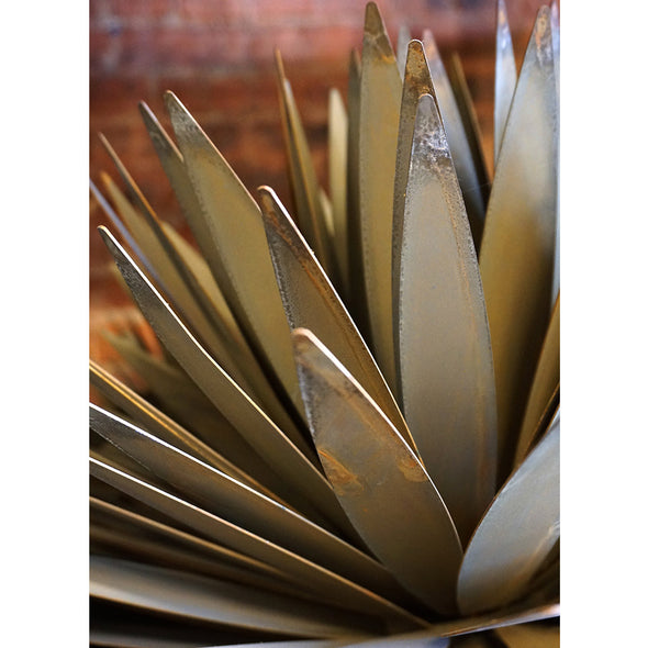 Close up of steel yucca leaves