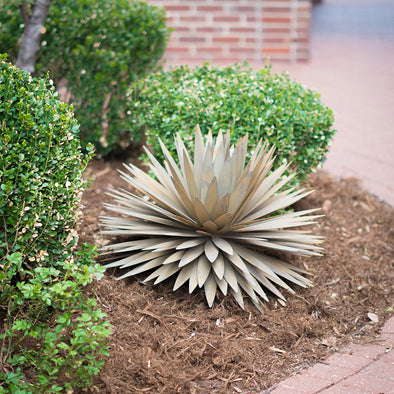 Steel Yucca in landscape bed next to bushes