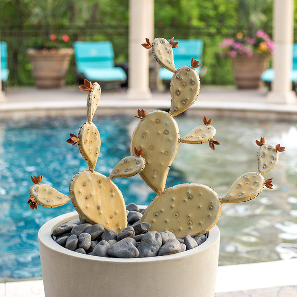 Steel Prickly Pear in pot next to pool - Ancho