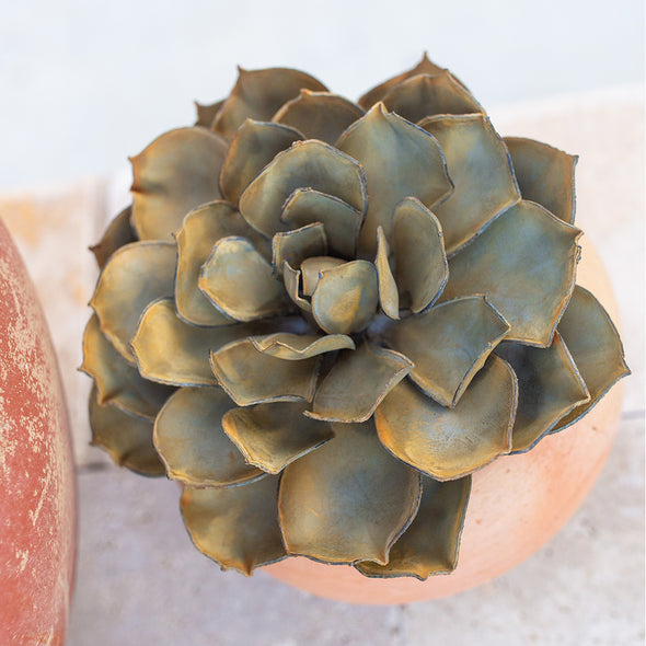 Blue Rose Succulent