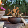 Steel Prickly Pear in pot - Redondo