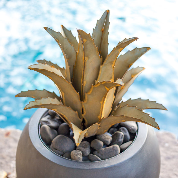 Steel Americana Agave in pot next to pool