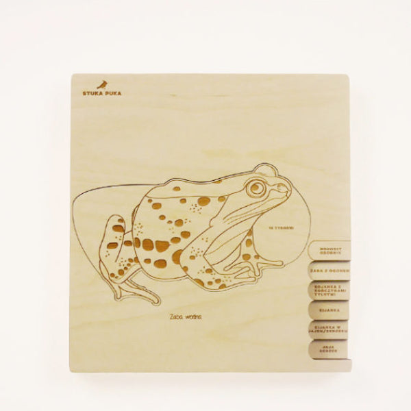 Frog lifecycle layered wooden puzzle by StukaPuka