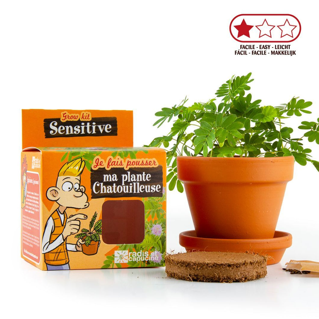 Extraordinary varieties: Sensitive Mimosa Pudica - jiminy eco-toys