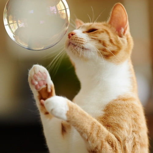 Giant Eco Bubbles for Cats! - jiminy eco-toys
