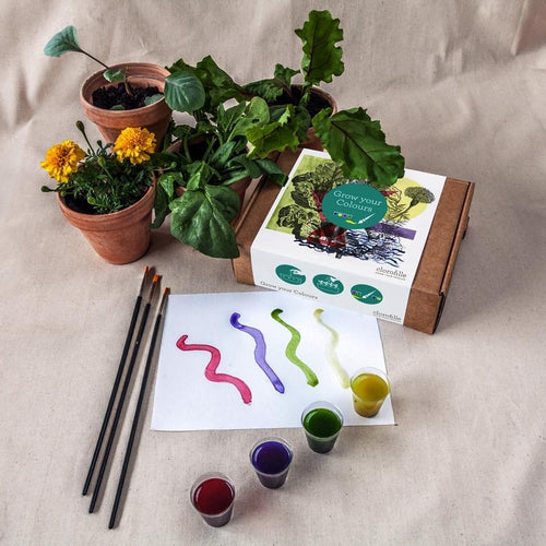 Grow Your Own Paints - jiminy eco-toys