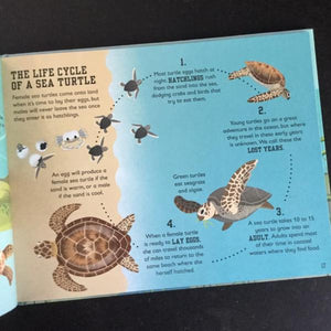 The Sea Book by Charlotte Milner, hardback book - jiminy eco-toys