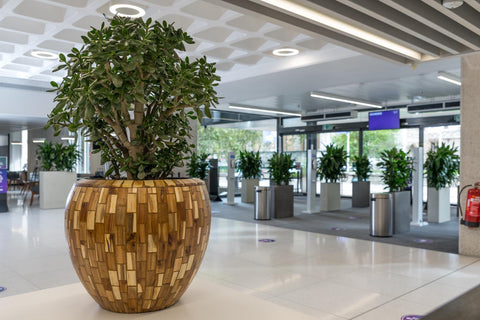 QEII Office Planting - EMFD London - Florist - Floral Design