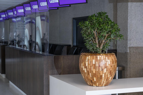 Office Planting - EMFD London - London Floral