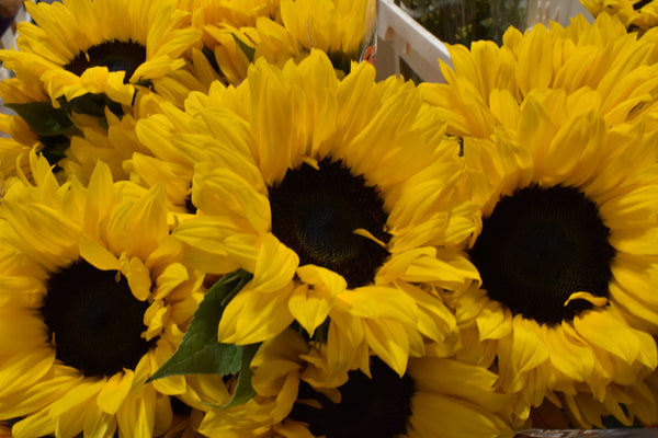 sunflowers-floral-design-london