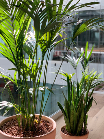 Biophilia - Office Plating with EMFD London