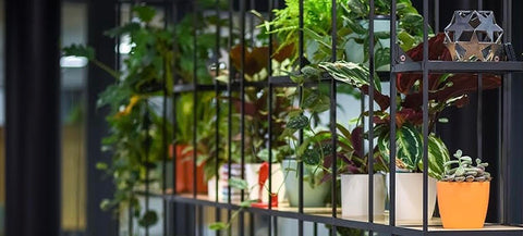 Office Planting with EMFD London