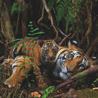 Puzzle - National Geographic - Mother Tiger and Cub