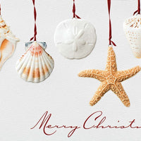 Christmas Card - Sea Shell Story (Box of 16)