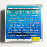 Prehistoric Shark Tooth Fossil Collection