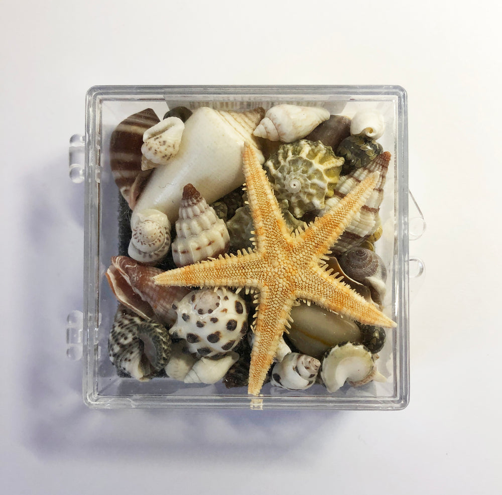 Shells in a Box