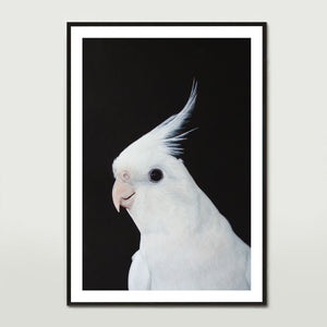 White Cockatiel Art Print